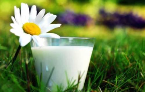 Почему нужно пить козье молоко, полезные свойства продукта. Козье молоко: полезные свойства в народной медицине и косметологии 3