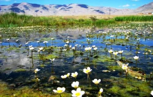 К чему снится болото: ходить по болоту, увязнуть в нём. Основные толкования: хорошо или плохо, если приснилось болото 8