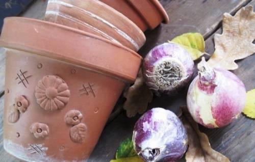 Луковичные  в саду: осенняя посадка гиацинтов. Тонкости выращивания гиацинтов и сроки посадки гиацинтов осенью (фото) 1